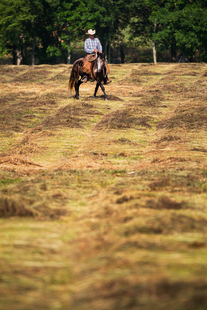 Richard Schouten riding grey lusitano gelding DEM Rayo in freshly cut hay fields at Don E Mor lusitano horse farm
