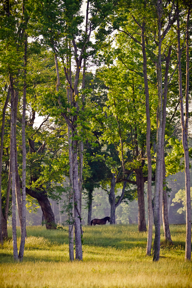 Horse standing in trees at Don-E-Mor